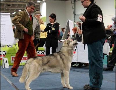 International Dog Show Graz (Austria)