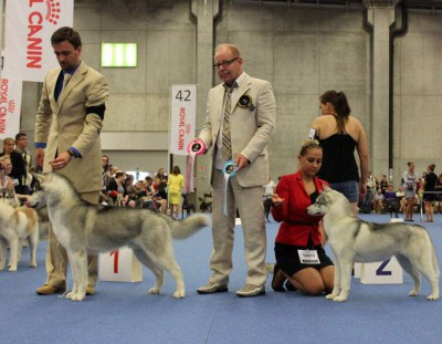 World Dog Show Helsinki 2014