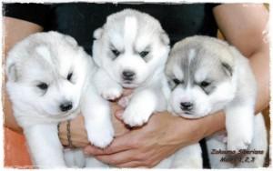 cachorros6