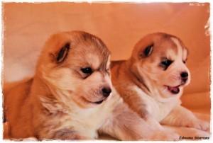cachorros8