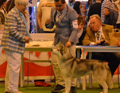 International Dog Show Spring Madrid (mandatory point)