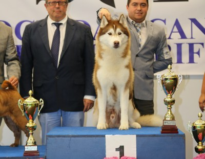 International Dog Shows Tenerife 2015