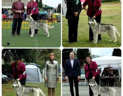 International Dog Shows in Croatia ( Bar, Dubrovnik  and Zadar)