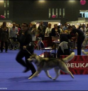 European Dog Show Brno 2014