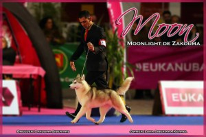 Moon_oporto_move