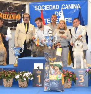 International Dog Show Tenerife 2017