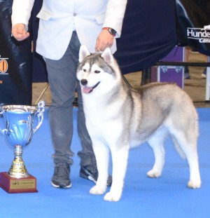 International Dog Show Madrid 2017 (mandatory point)